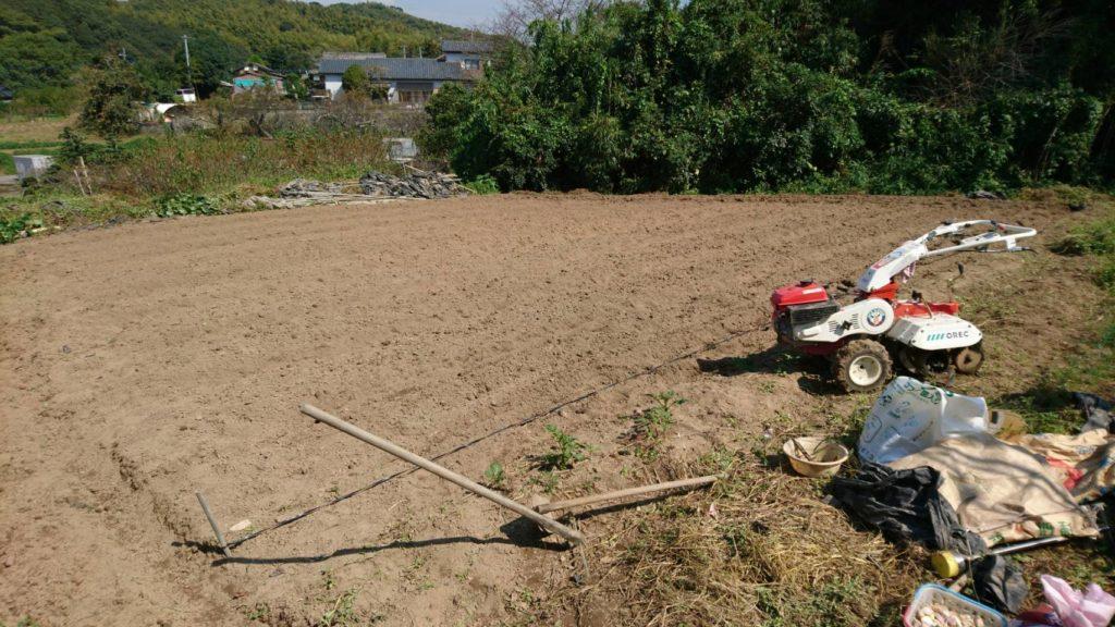 福岡県大牟田、自社栽培ニンニクの畑