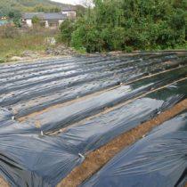 自社栽培ニンニクの植え付けに行って来ました!